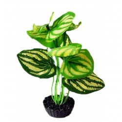 Plante tissu vert LABEO
