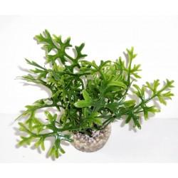 Algue vert PM LABEO