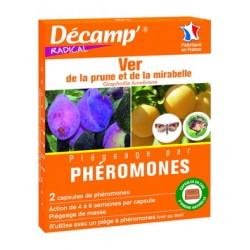 Pheromone ver prune