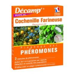 Pheromone cochenille...