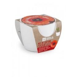 Mini kit ceramique coquelicot