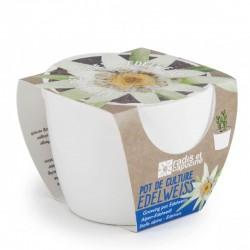 Mini kit ceramique edelweiss