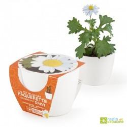 Mini kit ceramique paquerette