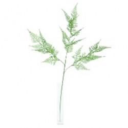 Asparagus sprengeri 74cm vrt