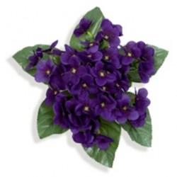Piquet de violette