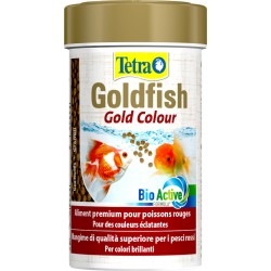 Tetra goldfish gold colour...